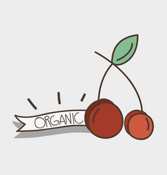 Fresh cherry organ fruit with ribbon vector