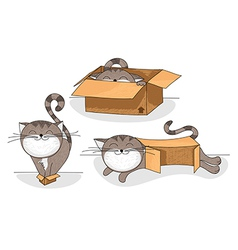 cat in box cartoon collection vector image vector image