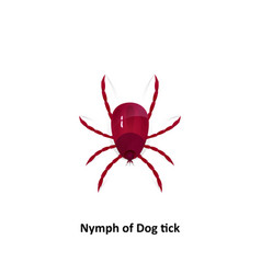 dog tick on a white background vector image