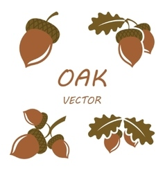 flat oak icons set vector image