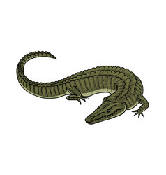 green crocodile american alligator reptile vector image