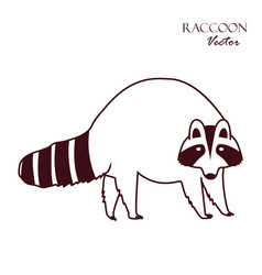 raccoon icon isolated on white background sketch vector image