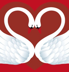 Two Swans in Love vector