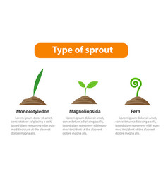 type sprout plant infographic vector image