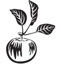 apple black vector image