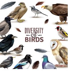 birds diversity frame composition vector image