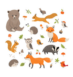 cute little woodland wild animals and birds vector image