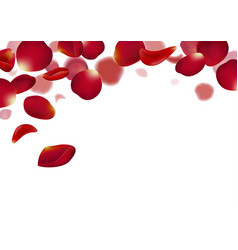 red rose petals falling on white background vector image