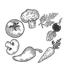 Vegetables sketch engraving vector