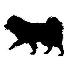 Volpino italiano silhouette vector