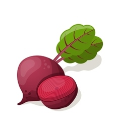 Beet isolated on white vector image vector image