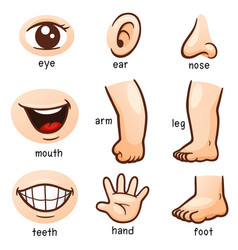 Body part vector