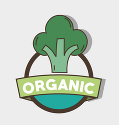 Fresh broccoli organ vegetable symbol vector