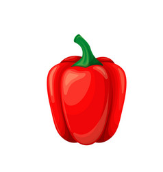 Red pepper icon vector