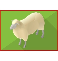 Sheep isometric flat 3d vector image