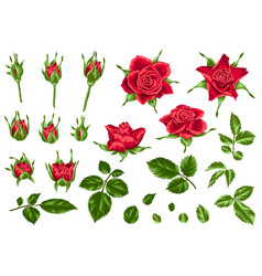 set of decorative red roses vector image vector image