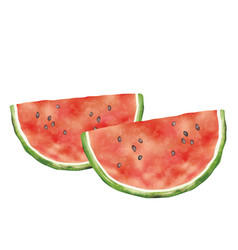 Watercolor watermelons isolate on a white bkg vector