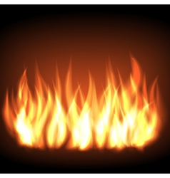 Burning fire flame vector image vector image