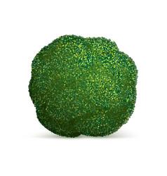broccoli cabbage icon realistic style vector image