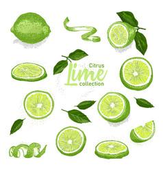 Color set of hand drawn tropical citrus fruit vector