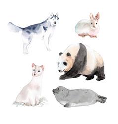 Set watercolor design rabbit panda ermine of vector
