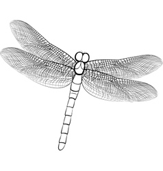 sketch of a dragonfly isolated on vector image