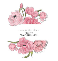 tender peony drawing banner flower composition vector image