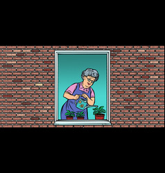 the old woman in window watering potted vector image
