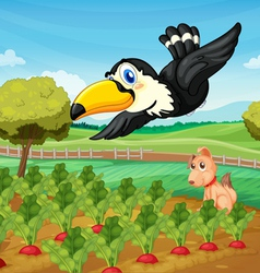 Toucan over farm vector image vector image