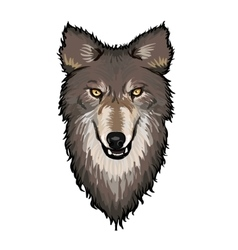 Gray Wolf Head vector image