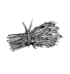 painted sheaf of hay and spikelets vector image vector image