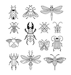bugs insects butterfly ladybug beetle vector image