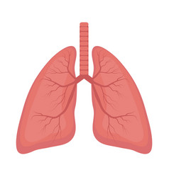 lungs icon flat style internal organs the vector image