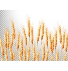 Ears of wheat EPS 10 vector image