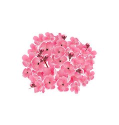 sakura bouquet of pink cherry flowers isolated vector image