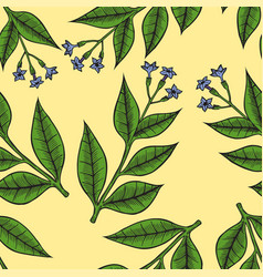 pattern herbs and flowers vector image