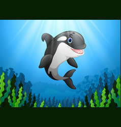 cute killer whale under water vector image