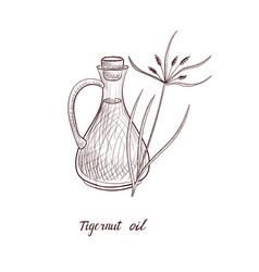 Drawing tigernut oil vector