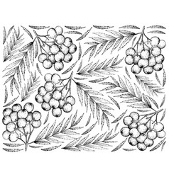 Hand drawn background of ripe rowanberry fruits vector