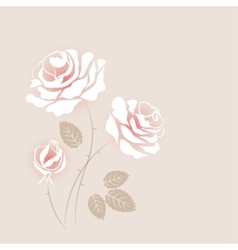 Delicate vintage card with some white roses vector image vector image