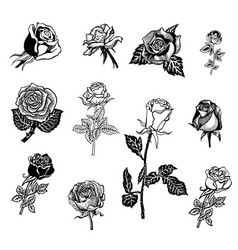 roses design elements vector image vector image