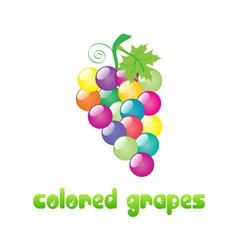 colored-grapes vector image