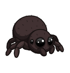 cute little spider with hairs on body vector image