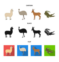lama ostrich emu young antelope animal vector image