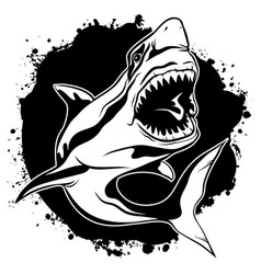 Graphic drawing ink aggressive shark with open vector