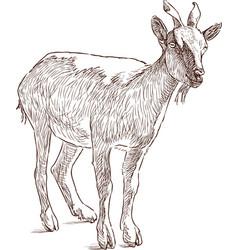 Mountain goat vector