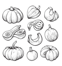 pumpkin whole and halves hand drawn vector image
