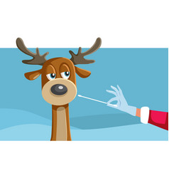 Reindeer being swabbed for a covid-19 test vector