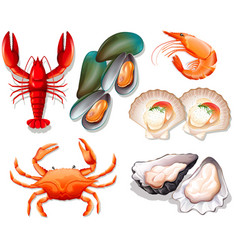 Set of seafood on white background vector