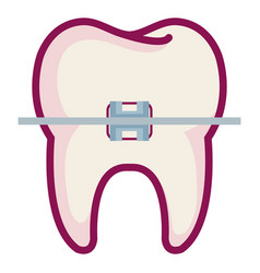 tooth with brakets isolated icon vector image